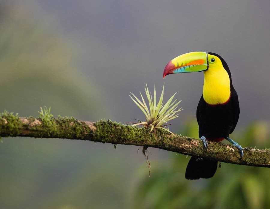 Costa Rica has launched a carbon footprint calculator