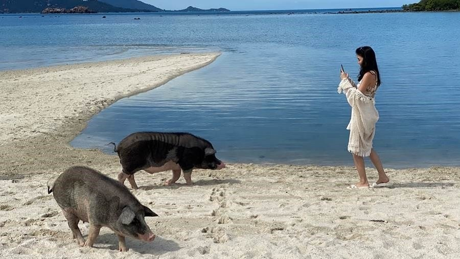 Travelers Discover Thailand's 'Bay of Pigs'